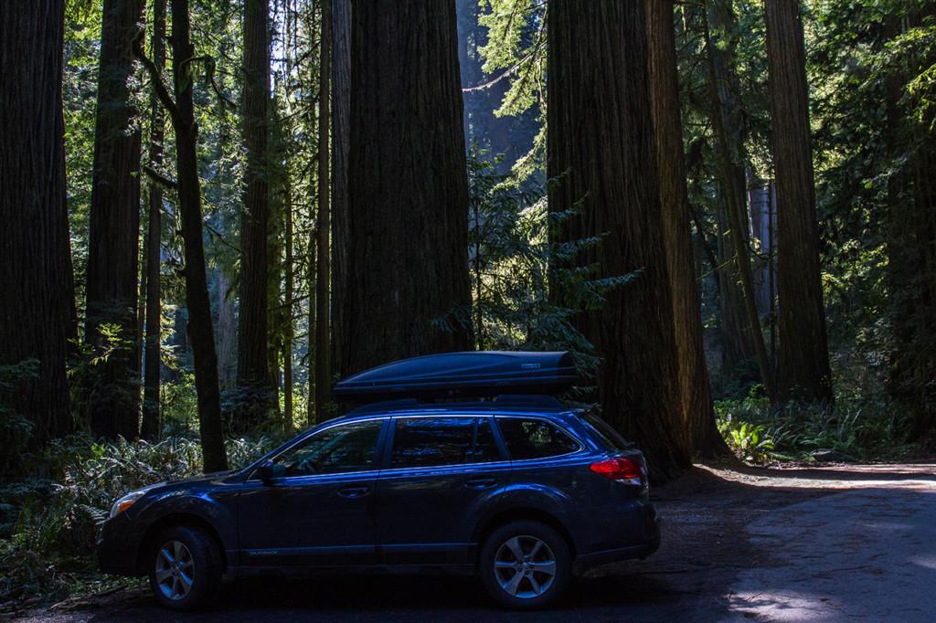 Redwoods_DaleCody_9298_1280x853